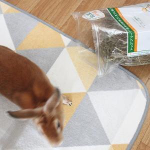 袋で食べる?