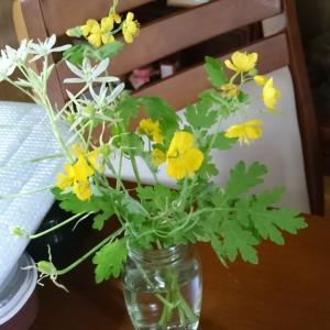 野の花ー雑草と主婦業物思い