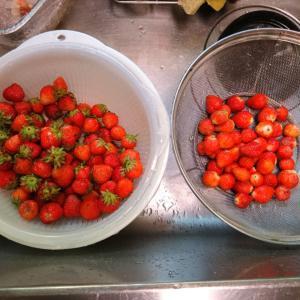 梅仕事とイチゴ仕事(!?)🍓イチゴ酢・青梅酢を作る