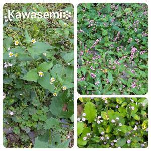 秋の野の花🍂これも緑だ!