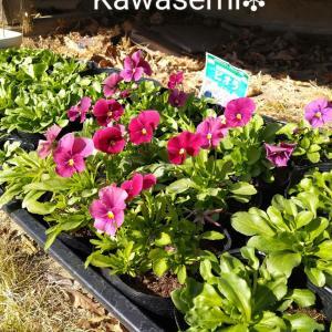 ダンボールコンポスト🍓春!庭の手入れを始めました