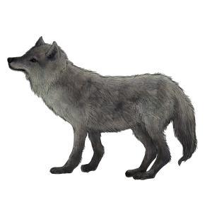 狼のフリーイラスト