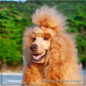 品のある優雅なスタンプー☆ヴェネーラ☆Mark IIIの子犬