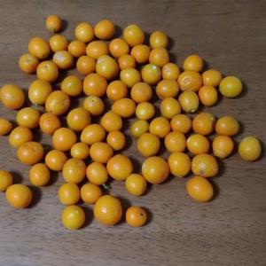 手作り金柑マーマレード