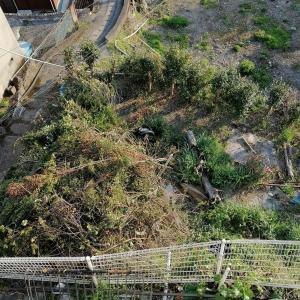 庭の掃除1