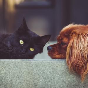 ペット不可の賃貸物件でもペットを飼育する方法