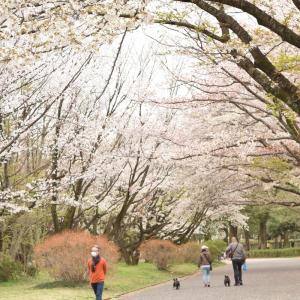 【2020年】今年の春はお家でお花見してみませんか?