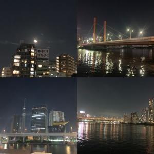 隅田川テラス12キロ:20キロ走の翌日にここまで走るのは邪道かな