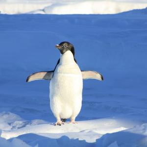 ペンギン太郎のプロフィール