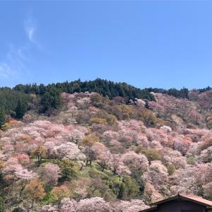 吉野山の桜情報 ~YOSHINO 2020~