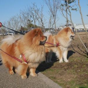 お散歩大好きとトラウマ