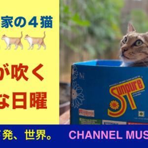【今日の動画 056】2分間のデカン高原旅を。涼風と猫らの光景。