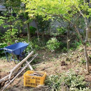 おこもり中、お庭のお手入れ&お花の植え込み作業