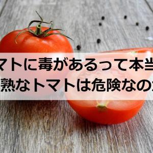 青いトマトに毒性があるって本当?【未熟な果実は食べられないのか】
