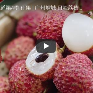 ライチ/荔枝(リーズィ)/中国南方果物