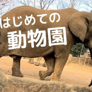 息子とはじめての動物園