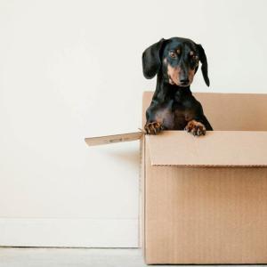 引っ越し料金の見積もりを一括で複数とる方法【5分で出来る】