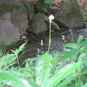 名古屋「徳川園」で見たこの花の名前?・・・
