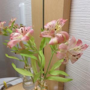 「アルストロメリア」同じ花でも環境が違うと花の色も・・・