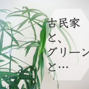 古民家に映える観葉植物たち