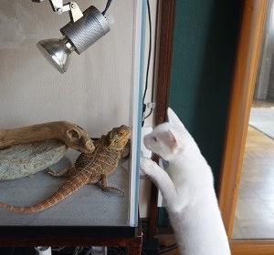 猫が変なことしているシリーズ1