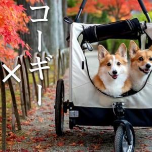 ペットと行ける世界遺産〝毛越寺〟の紅葉がマジで最高だった!