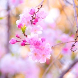 花でつづる 3.11