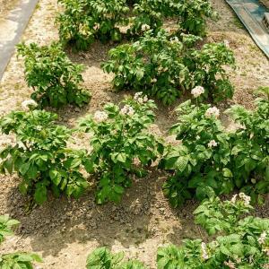自給自足への道!夏野菜栽培