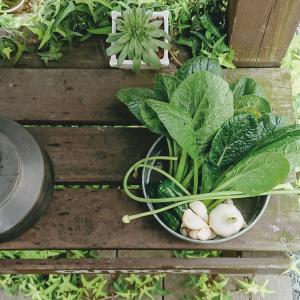 休業中なので、ニンニクの収穫! スキレット料理!