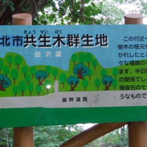田沢湖を歩いて一周 2
