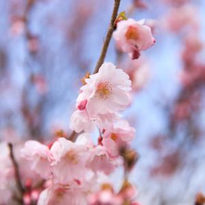 新潟の春を撮る