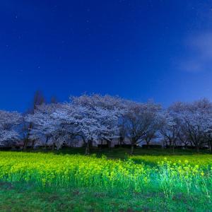 上堰潟公園で夜桜を撮ってきたお話