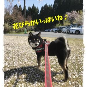 ひめのお花見散歩(^^♪