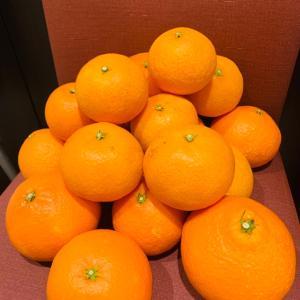 愛媛の柑橘農家が教える!美味しいみかんの選び方