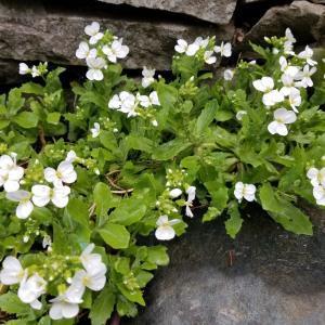 4月初めに咲いている花壇の草花