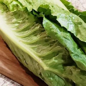 【ライフ】美味しくて便利なお野菜 ロメインレタス(ロメインハート)