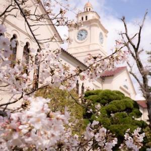 母校の図書館と桜