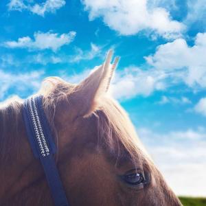 馬のコトバを聞こうとしてる?