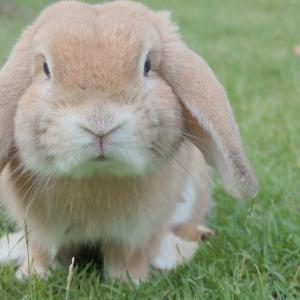 迷子のウサギ?(48)