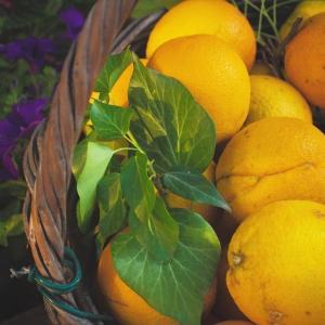 中力粉で作るレモンヨーグルトパウンドケーキ