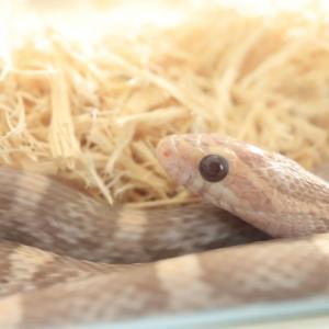 蛇がコワい。でもハンドリングして触ってみたいw