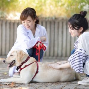 本日メルマガ配信日~ターミナル期における動物さんと飼い主さんのグリーフケアについて
