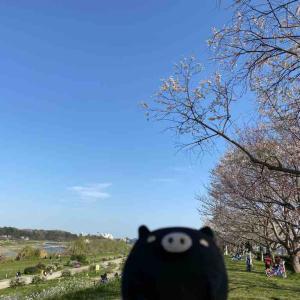 多摩川沿いに、ながーい散歩。