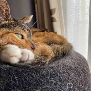 うちの猫の不思議「手じゃなくて、足が好み!」