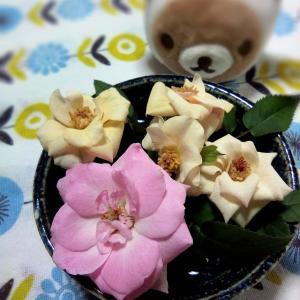 園芸日記 ピンクのミニバラ