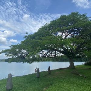 シンガポールの貯水池 全部行きたい!~ Lower / Upper Peirce Reservoir