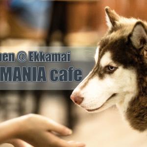 [日本人経営]DOG MANIA cafeに行ってきた[Sukhmvit61]