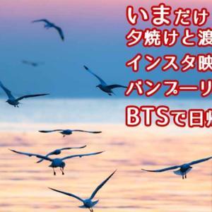 【バンプ―リゾート】いまだけ!夕焼けと渡り鳥のインスタ映えスポット