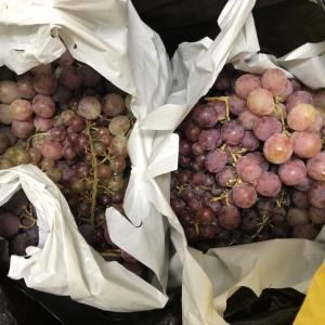 ソコヌケニアカルイ ワイン作り