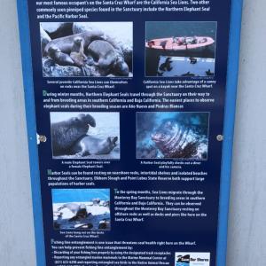 ソコヌケニアカルイ サンタクルズで釣りに挑戦